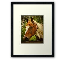 Horse at the Fence Framed Print