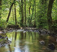 Summer Brook - III by David Tinsley