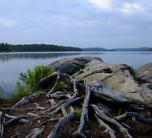 Smoke Lake Shoreline- Algonquin Park Canada by Tracy Faught