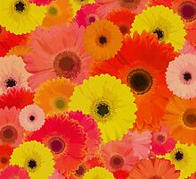 JUST YOU AND ME IN A GERBER DAISY SEA by Rebecca Allen