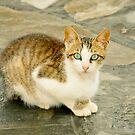 Blue-eyed cat by marina63