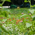 Tractor in Flowers by BrianDawson