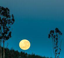 Pine Moon * Spargo Creek Victoria by Deon Mackay