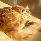 Maine Coon by HeklaHekla