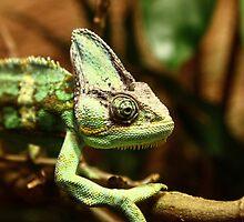 chameleon by Xenne