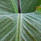 Frost On The Canna by WildestArt