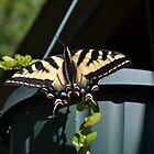 Beautiful Butterfly by Courtneystarr
