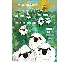 You are My Sheep Photographic Print