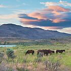 Wild Mustangs in Nevada by Dianne Phelps
