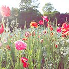 Wild Poppies In The Breeze. by LittlePhotoHut