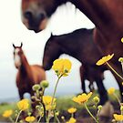 Buttercups and Horses by LittlePhotoHut