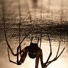 Spider natural by Mats Gustafsson