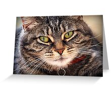 A Purrfect Portrait Greeting Card