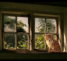 Lazing on a sunny afternoon by © Kira Bodensted