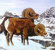 Colorado Bighorns by Doug Hiser