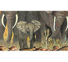 Samburu Elephant Youngster Photographic Print