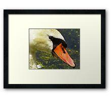 The Trusting Swan Framed Print