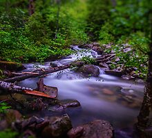 Small Cascade - Forest Service Road 5510 - Washington State - U.S.A. by Vincent Frank