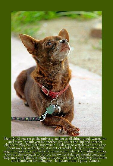 Johnny Canelo Praying - dog prayer by Larry3