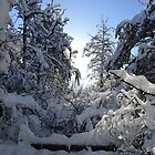 Snowy Winter Trees  by MoniqueFlynn
