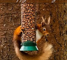 Red Squirrel Birthday Card  by Moonlake