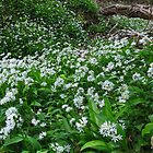 Wild Garlic Woodland by David Tinsley