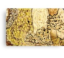 Fields of Mushrooms Canvas Print