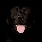 Black labrador by paulwhittle