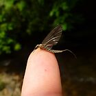 Mayfly by Chad Burrall