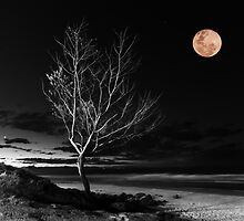 Venus and the Moon by Cheryl Styles