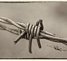 Barbed Too by Paul Earl