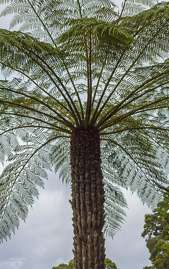 Tasmanian Tree Fern by Elaine Teague