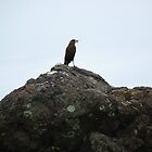 Bird on a Rock by godtomanydevils