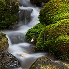 Moss Covered Tributary by Alan Mitchell