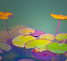 lotus floating leaves by terezadelpilar~ art & architecture