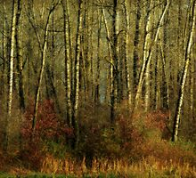 Fall Trees by Annie Lemay  Photography