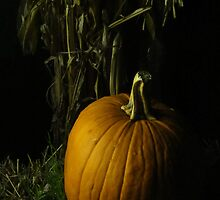 Pumpkin Pumpkin Big And Round by Guy Ricketts