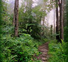 The Misty Woods by TrendleEllwood