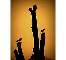 Saguaro Snack at Sunset Silhoutte Photographic Print