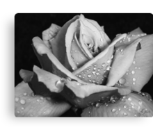 """""""Rose Without Color"""" Canvas Print"""