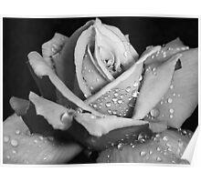 """""""Rose Without Color"""" Poster"""