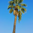 Palm Tree Over Clear Blue Sky by kirilart