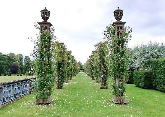 Eaton Hall Roses by AnnDixon