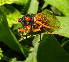 Rebirth of the Cicada by PineSinger