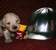 Safety Monitor Puppy  by goldnzrule