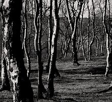 Bolehill Birch by Angie Morton