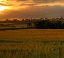 Field of Dreams by Jon Lees