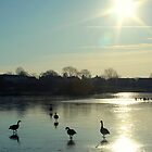 Geese On A Frozen Lake by LittlePhotoHut