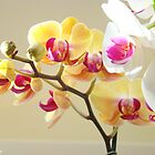 Orchids Foral Art Prints Orchid Flowers by BasleeArtPrints