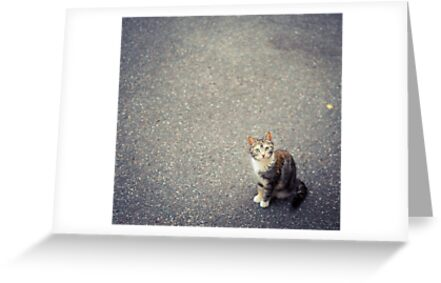 Cute little cat by netza